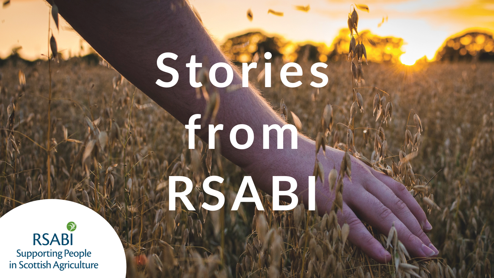 Stories from RSABI graphic
